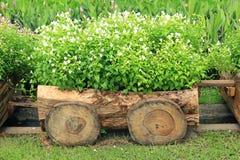 Flores em uns potenciômetros na caixa de madeira Fotografia de Stock