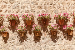 Flores em uns vasos de flores Fotos de Stock Royalty Free