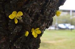 Flores en árbol Imágenes de archivo libres de regalías