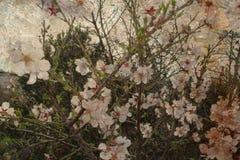 Flores en árboles Imagen de archivo