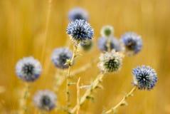Flores en agosto Fotografía de archivo