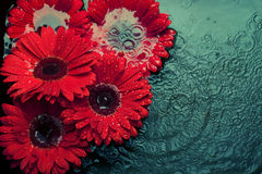 Flores en agua imagen de archivo libre de regalías