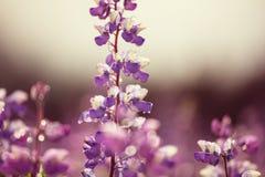 Flores en Alaska Fotografía de archivo libre de regalías