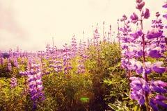 Flores en Alaska Foto de archivo libre de regalías