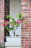 Flores en balcón Foto de archivo libre de regalías