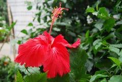 Flores en Bangladesh campo del club de la prensa del jatio Imagen de archivo