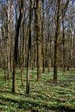 Flores en bosque fotos de archivo