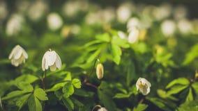 flores en bosque del resorte imagenes de archivo