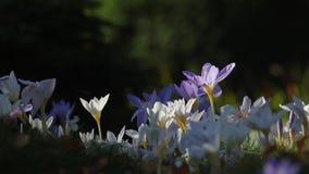 Flores en brisa almacen de metraje de vídeo