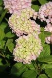 Flores en Bulgaria, año 2014 Foto de archivo libre de regalías