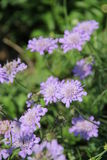 Flores en Bulgaria, año 2014 Fotografía de archivo libre de regalías