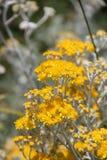 Flores en Bulgaria, año 2014 Imagenes de archivo