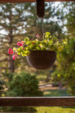 Flores en caída de los potes en la calle Fotografía de archivo