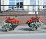 Flores en calle foto de archivo