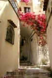 Flores en callejón Fotos de archivo libres de regalías