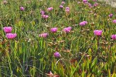 Flores en Cantabria imagen de archivo libre de regalías