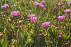 Flores en Cantabria fotografía de archivo libre de regalías