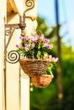 Flores en cestas colgantes Imagenes de archivo