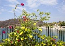 Flores en ciudad de vacaciones Fotos de archivo libres de regalías