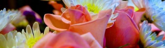 Flores en colores en colores pastel Imágenes de archivo libres de regalías