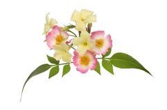 Flores en colores pastel Fotos de archivo