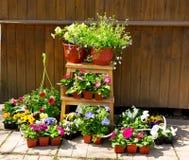 Flores en conserva con los utensilios de jardinería fotografía de archivo