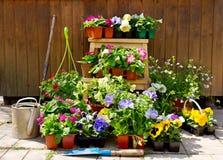 Flores en conserva con los utensilios de jardinería fotos de archivo