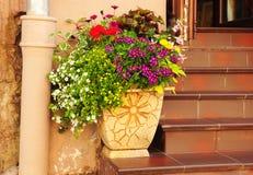 Flores en conserva de la primavera y vertiente del jardín Cama de flor en la maceta acogedora para la decoración de la puerta de  Imagenes de archivo