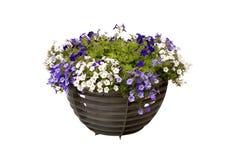 Flores en crisol Imagenes de archivo