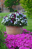Flores en crisol Jardinería Imágenes de archivo libres de regalías