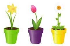 Flores en crisoles Imágenes de archivo libres de regalías