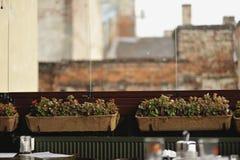 Flores en crisoles Foto de archivo libre de regalías