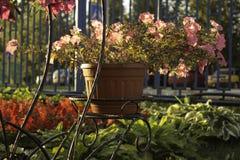 Flores en crisoles Fotografía de archivo libre de regalías
