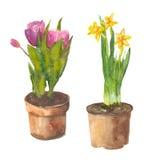 Flores en crisoles Imagenes de archivo