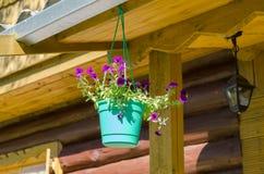 Flores en crisoles Imagen de archivo libre de regalías