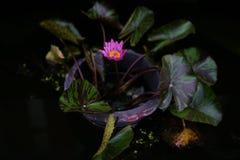 Flores en crisoles Fotos de archivo