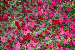 Flores en cuadrados y parques parisienses imagenes de archivo
