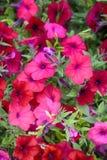 Flores en cuadrados y parques parisienses imagen de archivo libre de regalías