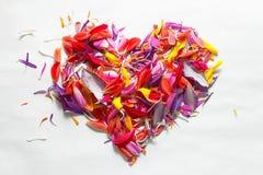 Flores en dimensión de una variable del corazón Foto de archivo libre de regalías