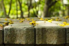 Flores en el árbol del fondo del bloque del ladrillo borroso fotos de archivo libres de regalías