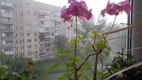 Flores en el alféizar en la ciudad almacen de metraje de vídeo