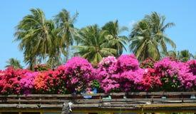 Flores en el barco en el delta del Mekong, Vietnam imagenes de archivo