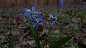 Flores en el bosque Foto de archivo libre de regalías