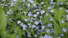 Flores en el bosque almacen de metraje de vídeo