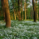Flores en el bosque Fotografía de archivo libre de regalías