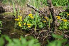 Flores en el bosque Fotografía de archivo