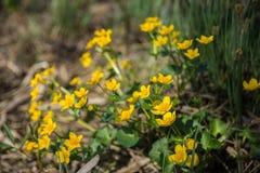 Flores en el bosque Fotos de archivo