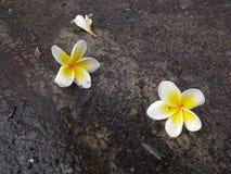 Flores en el camino, Hadyai, Songkhla, Tailandia Imagenes de archivo