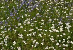 Flores en el campo. Imagen de archivo