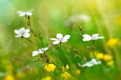 Flores en el campo Fotografía de archivo libre de regalías